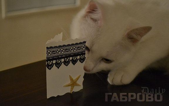 Събитие на Приют за животни в Габрово