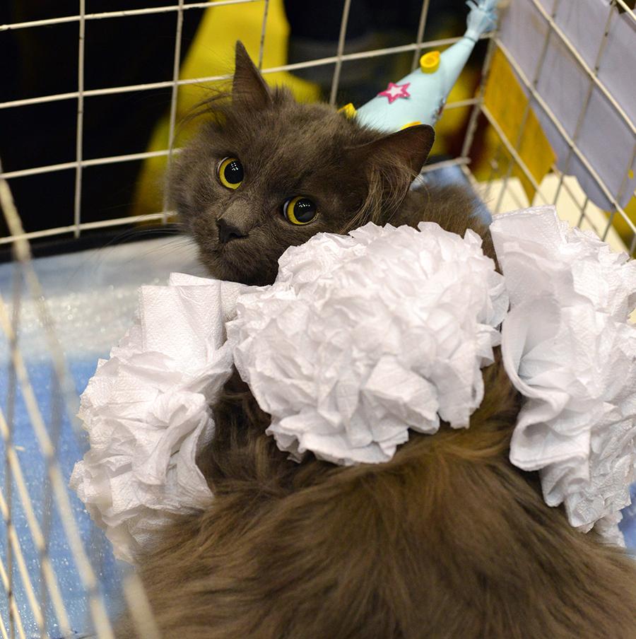 Карнавал-ревю на котки