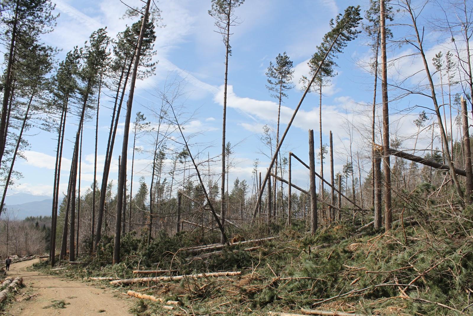 Ураган през 2013 г. на Градище