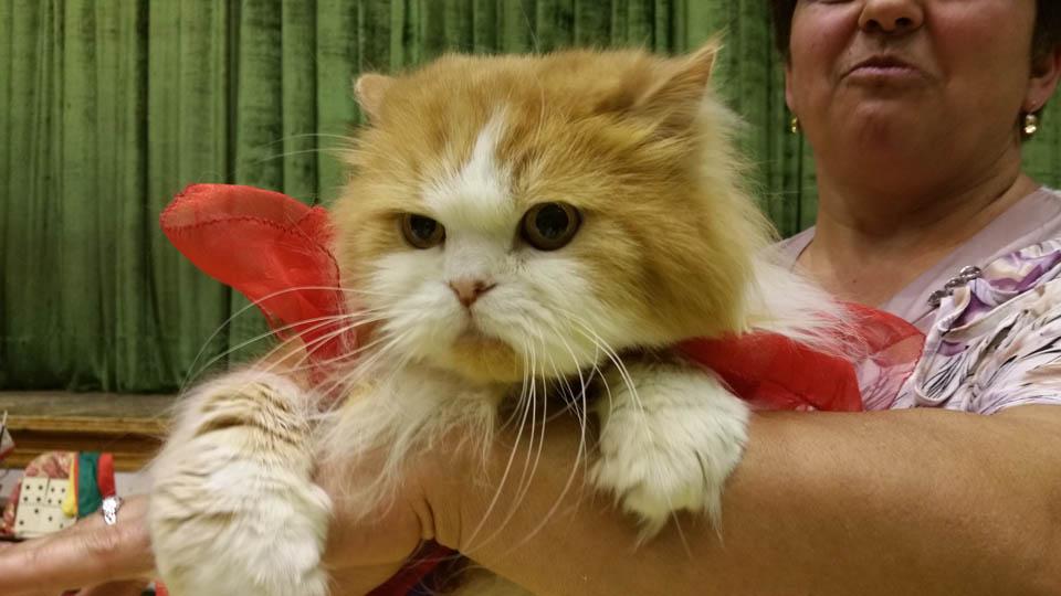 Карнавал-ревю на котки в Габрово © Община Габрово