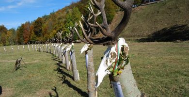 Трофеи от благороден елен в местността Лъгът © СЦДП