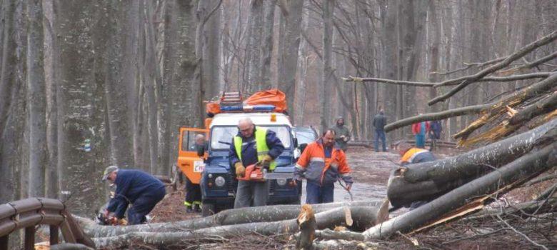 Екипи разчистват пътя за Узана от падналите през нощта дървета, 18 март 2018. Снимки: Facebook, Узана Узана Узана