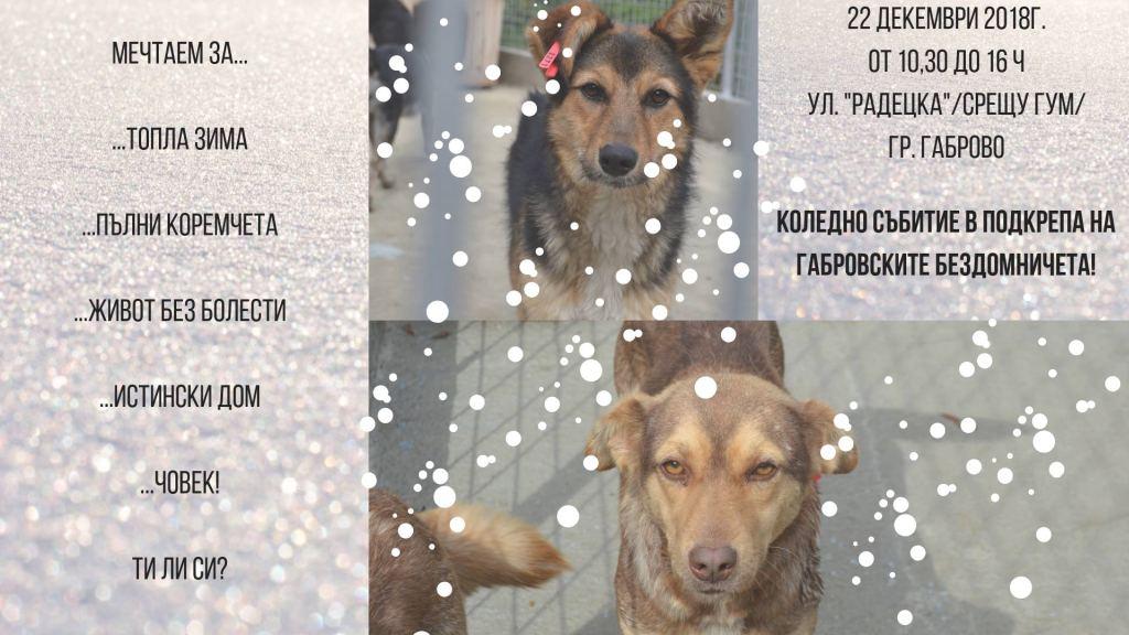 Благотворителен коледен базар в помощ на животните от приюта в Габрово