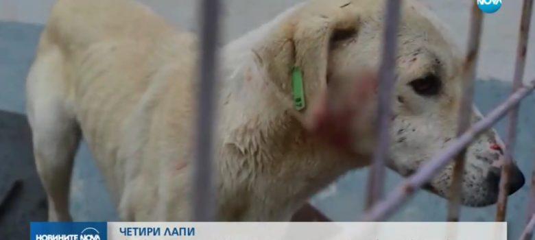 Репортаж на Нова тв за приюта за бездомни животни в Габрово